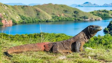 Komodo Dragon Adventure 4D/3N (from Labuan Bajo)