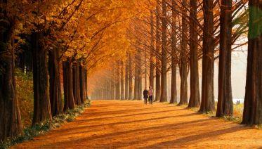 Korean Fall Journey