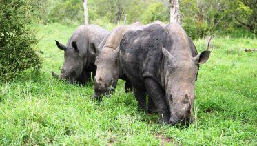 Kruger Full Day Safari
