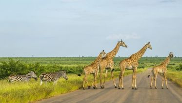 Kruger, Swazi & Beach