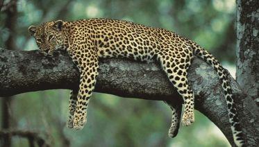 Kruger Tailor Made Safari 4 Day