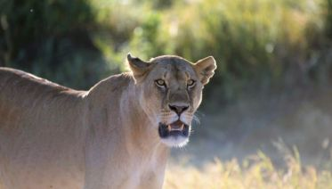 Kruger Wildlife Adventure Accommodated