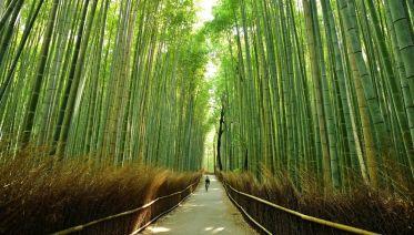 Kyoto Cycling and Hiking