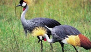Lake Manyara National Park Full Day Safari