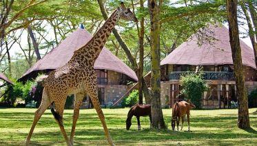Lake Naivasha & Maasai Mara Luxury Safari: 4 Days
