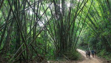 Laos Adventure and Thailand Trekking
