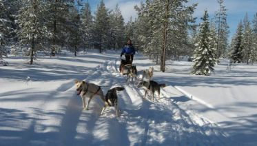 Lapland & Husky Highlights - 5 Days