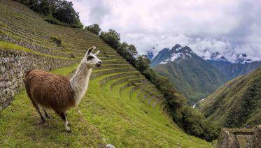 Lares Trek & One Day Inca Trail 5 Days