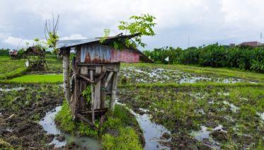 Lonely Planet Experiences Private Bali Tour: Hidden Rice Terraces Trek