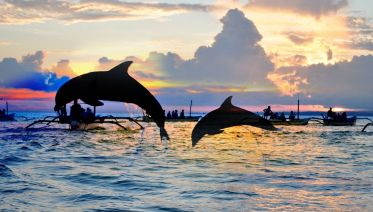 Lovina Sunrise Dolphin Watching Tour