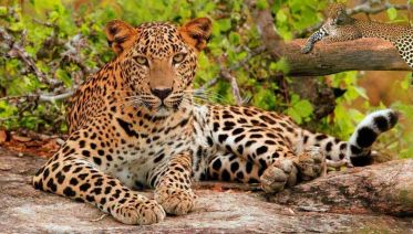 Luxury India Golden Triangle with Tigers & Leopards