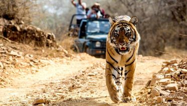 Luxury India Golden Triangle With Tigers