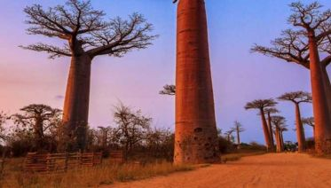 Madagascar Baobab Tree Trail