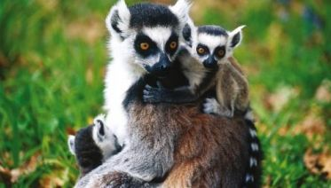 Madagascar Family Adventure
