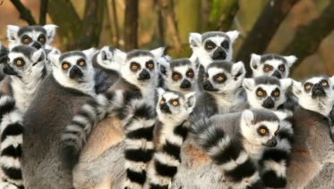 Magic Of Madagascar