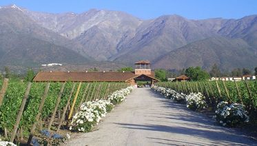Maipo Valley Boutique Wines: Haras de Pirque & Aquitania