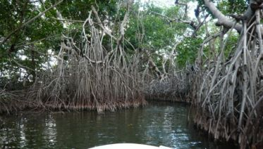 Mangrove Forest Tour