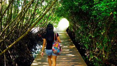Mangrove Forest Tour