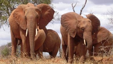 Masai Mara, Naivasha and Amboseli Special Offer