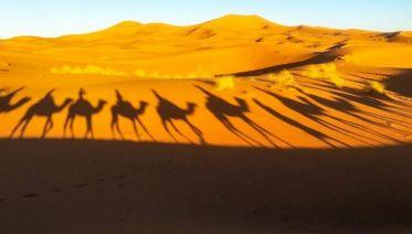 Meknes, Volubilis & Moulay Idriss Day Tour