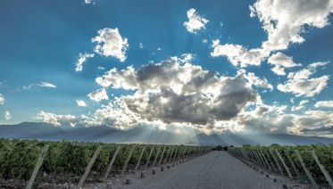 Mendoza, Los Andes And Wines
