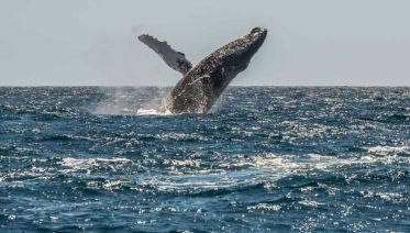 Mexico Sailing & Whale Watching Expedition