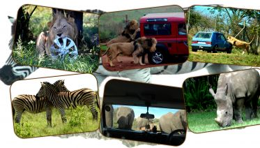 Safari And Phezulu Cultural Village Day Tour