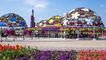 Miracle Garden With Transfers From Dubai