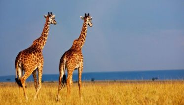 Mt Kenya Maasai