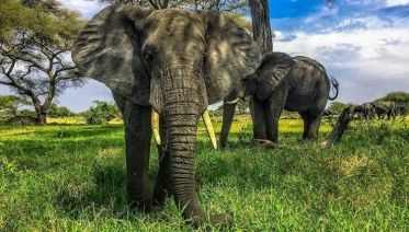 Nairobi Elephant & Rhino Orphanage Experience