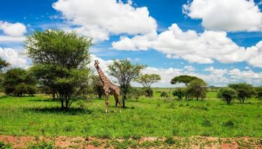 Nairobi Giraffe Breeding Centre Experience