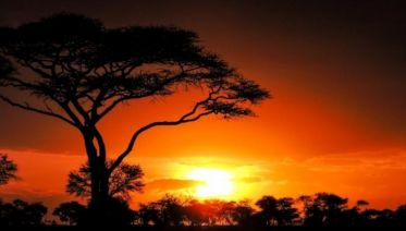 Unique and Authentic African Safaris and Holiday Vacations in 12222 and 2020