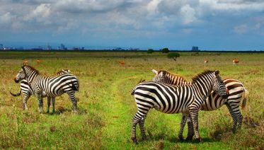 Nairobi Wilderness Safari