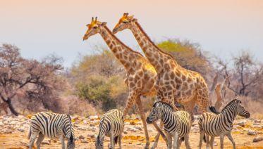 Namibia & Botswana: Dunes & Delta