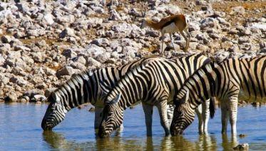 Namibia & Botswana Uncovered