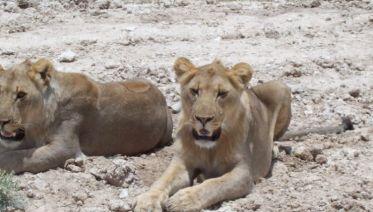 Namibian Highlights Safari 6D/5N