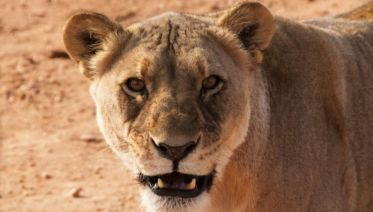 Namibian Highlights Safari 7D/6N