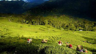 North & Northeast India