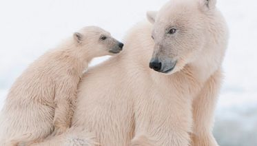North Pole Express: Barneo Ice Camp