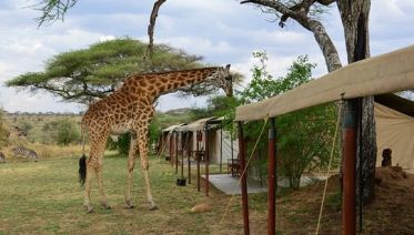 North Tanzania Camping & Lodge Safari