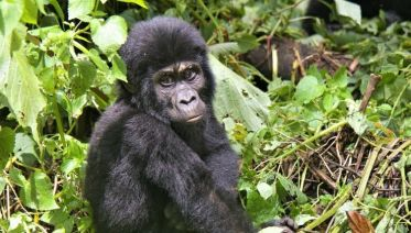 Ocean to Gorillas Accommodated 26 Days