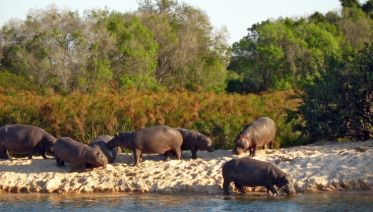 Okavango Wilderness Trail Accommodated