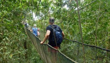 Orangutans & Mount Kinabalu Trek 7D/6N