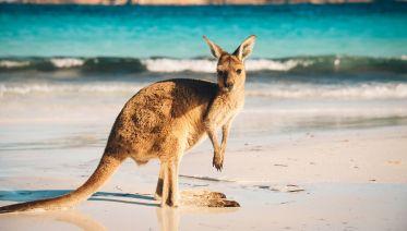 Outback & Kangaroo Island Adventure