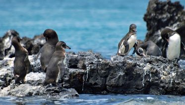 Pacific treasures: Penguins & alpacas private tour