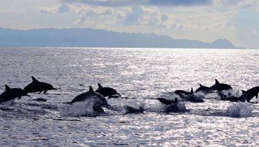 Pamilacan Marine Life Tour