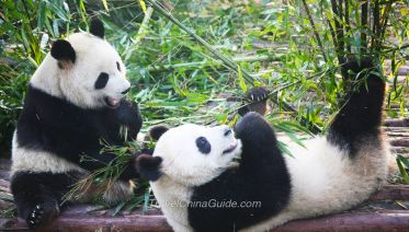 Pandas & Golden Cities in China