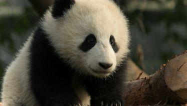 Pandas & Warriors Family Holiday