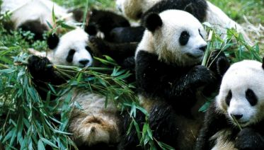 Pandas To Pagodas 2017/18