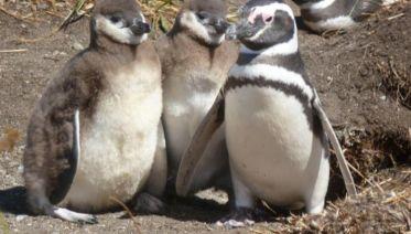 Penguin Colony Boat Ride From Ushuaia